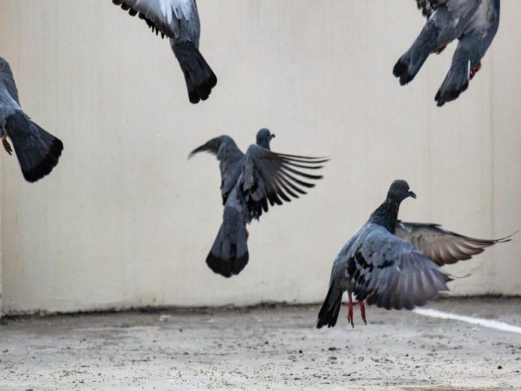 Bird scaring system